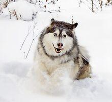 Snowplow!! by EchoNorth