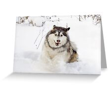 Snowplow!! Greeting Card