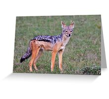 Jackal Greeting Card