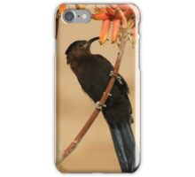 Nectar eating Amethyst Sunbird iPhone Case/Skin