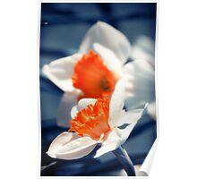 Narcissus Flower Poster