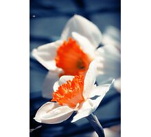 Narcissus Flower Photographic Print