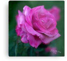 rose signed Metal Print
