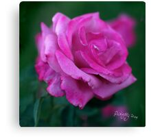 rose signed Canvas Print