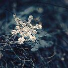Winter Blues by failingjune
