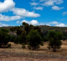 Amongst the Olives at Mt Stapylton by Jennifer Craker