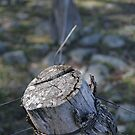Fence Post by Stanton Hooley