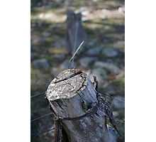 Fence Post Photographic Print