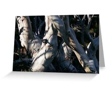 Snowgum Trunks Greeting Card