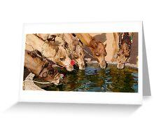 Pushkar Camels at the well Greeting Card