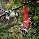 TIT'S Galore by George Swann