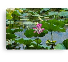 Oil painting water lily Canvas Print