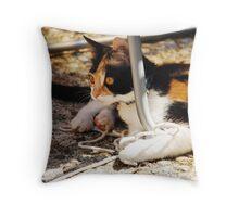 Tortoise Shell Kitten  Throw Pillow