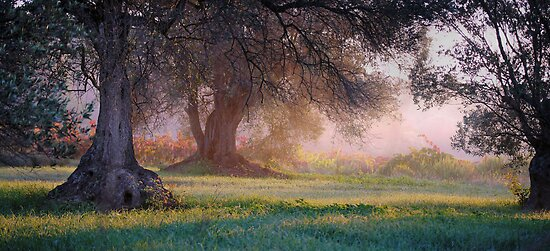 Spanish landscape with olivtrees by jimmy hoffman