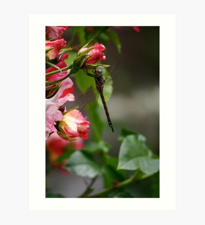Dragonfly Rose Art Print