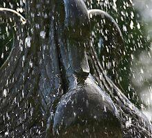 Swan Rain by K9Gannon