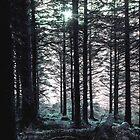 Twilight by Amy Flynn