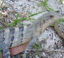 Iguana - Cancun, Mexico  by Tesko