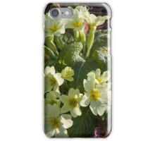 primroses in the meadow in spring iPhone Case/Skin