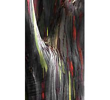 Rainbow Eucalyptus Photographic Print