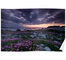 Guernsey Sea Pinks Poster