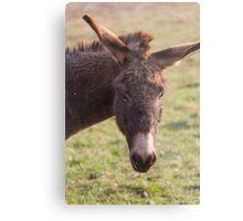 donkey in the farm Metal Print