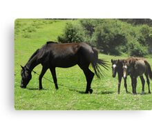 Mare and Colts in a Pasture Metal Print