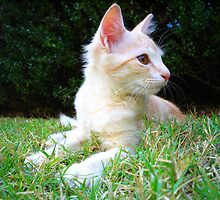 Kitty In The Grass by Lindsay Dean