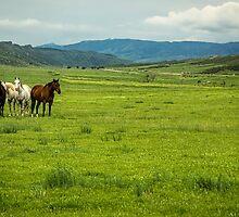 Green Pastures by Jon Burch