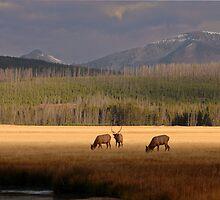 Gibbon River Valley, Yellowstone by Albert Dickson