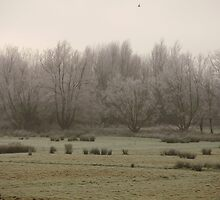 tree frost by brucemlong