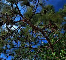 Pinecones 2 by LudaNayvelt