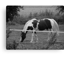 Monochrome Horse Canvas Print