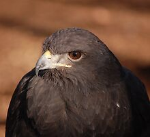 Golden Eagle by Gregg Williams