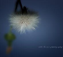 Dandelion Float © Vicki Ferrari Photography by Vicki Ferrari