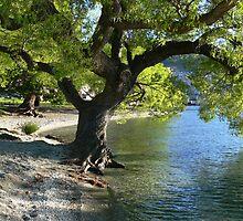 Lk Wakatipu by PhotosByG