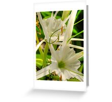Spider Lillies - HDR Greeting Card