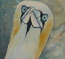 Gannet by JustAlison