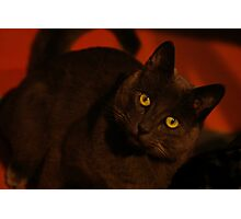 Cat in Red Photographic Print