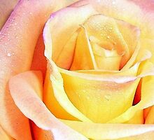 Precious Yellow Rose by OceanPeaceful