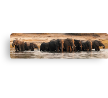 Elephant crossing the river Canvas Print