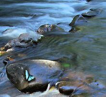 The river and the blue Morpho by jimmy hoffman