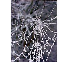 Winter web Photographic Print