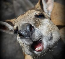 My first Wallaby by Richard Barry
