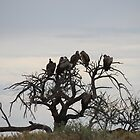 Vultures Having Their 5 o´Clock Break by HELUA