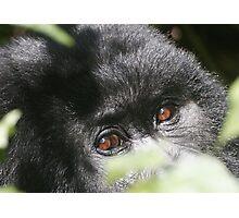 Gorilla Eyes Photographic Print