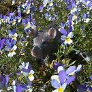 Wild pansies and sun make my June! by KanaShow