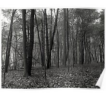 Stony Creek Forest Poster