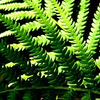Criss Cross Fern by Dennis Blauer