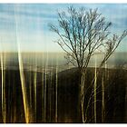 View from the Guttenberg Castle (Palatinate) #1 by Ronny Falkenstein